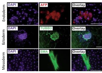 CERO 3D Cell Culture Bioreactor iPSC Differentiation